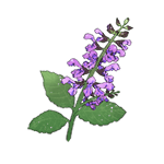 image-onisarubia